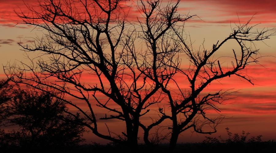 tramonto nel Moremi