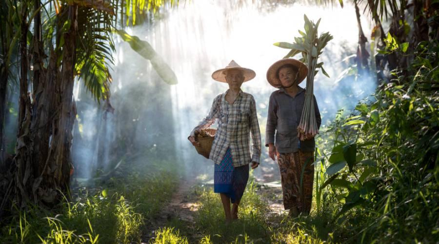 Contadini Birmani