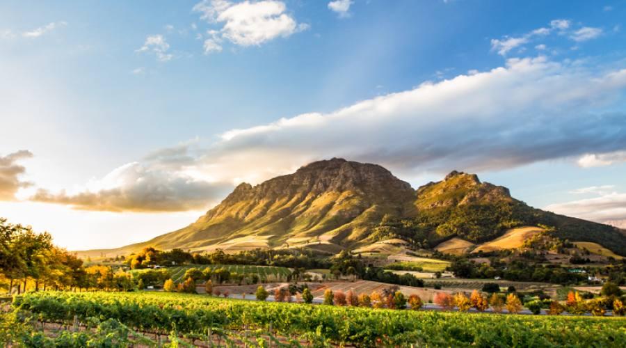 Regione vinicola