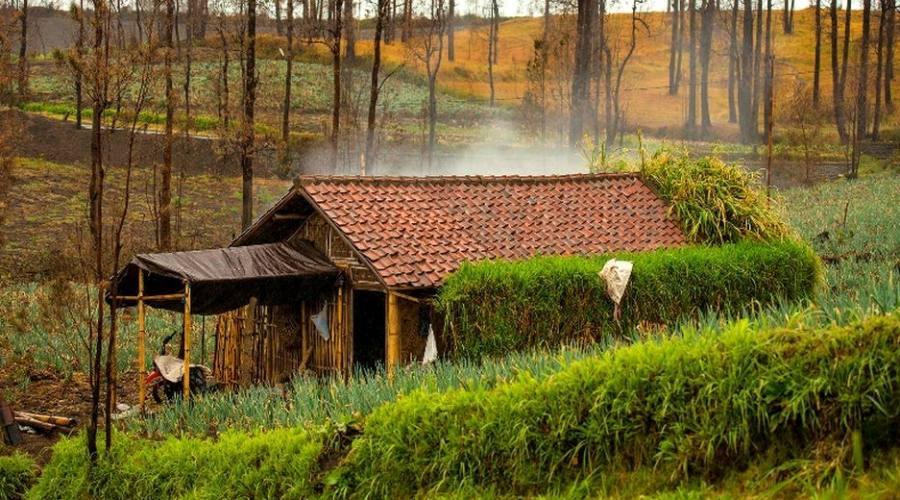 tosari village