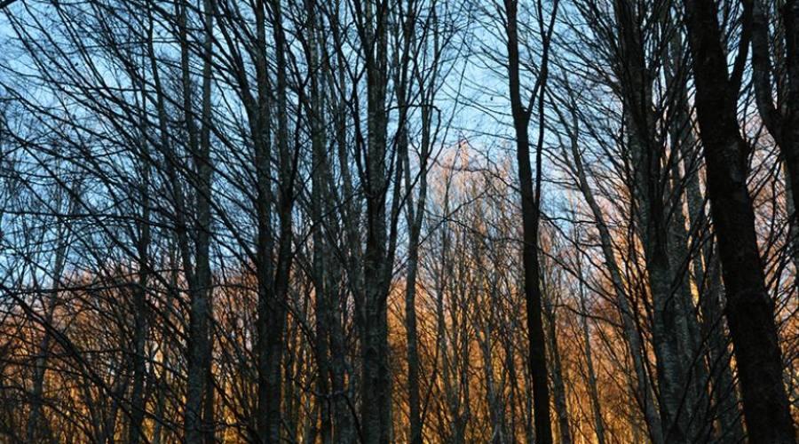 boschi di faggio