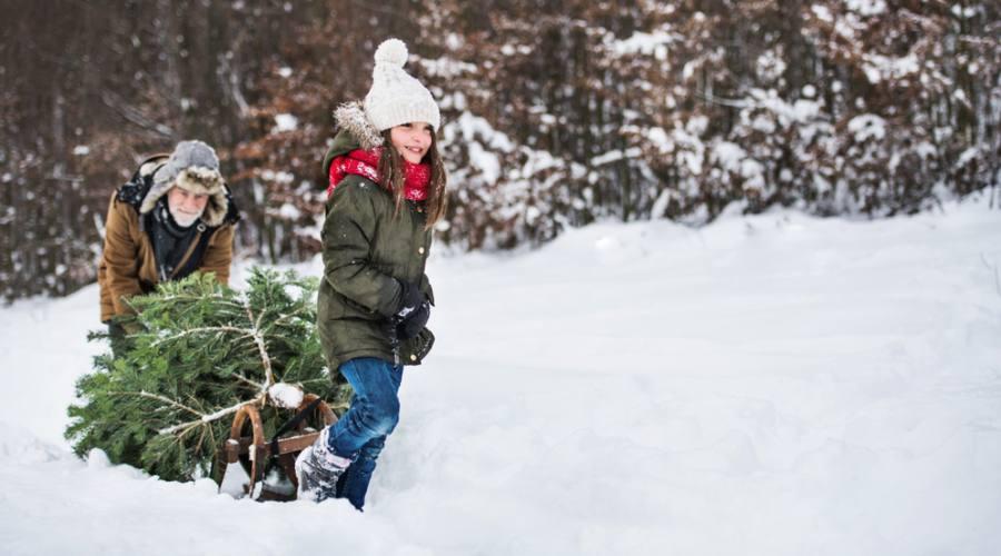 Albero di Natale in Lapponia