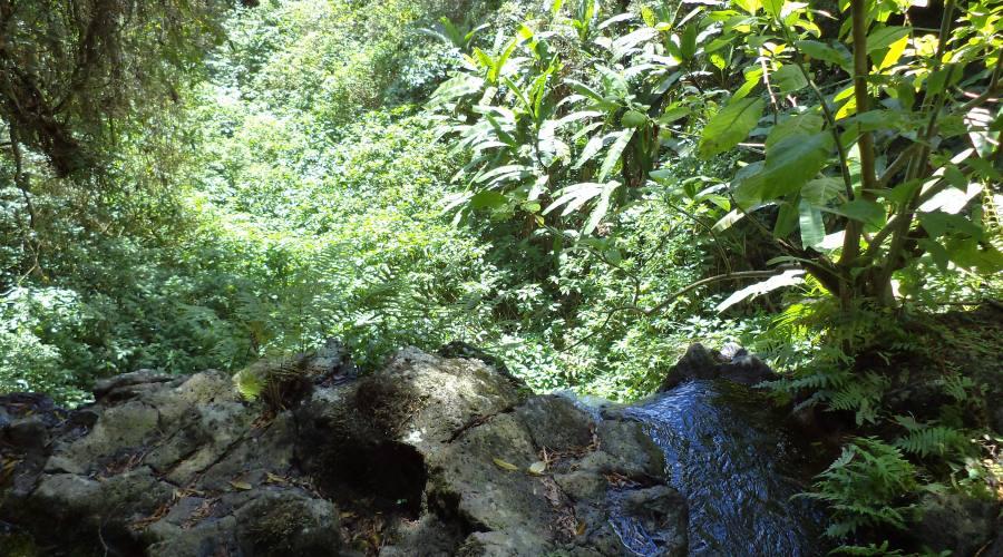 La forestra pluviale della Montagna d'Ambre