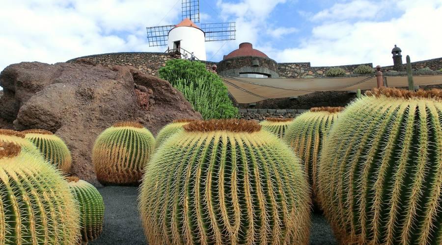 Il giardino dei cactus - Lanzarote
