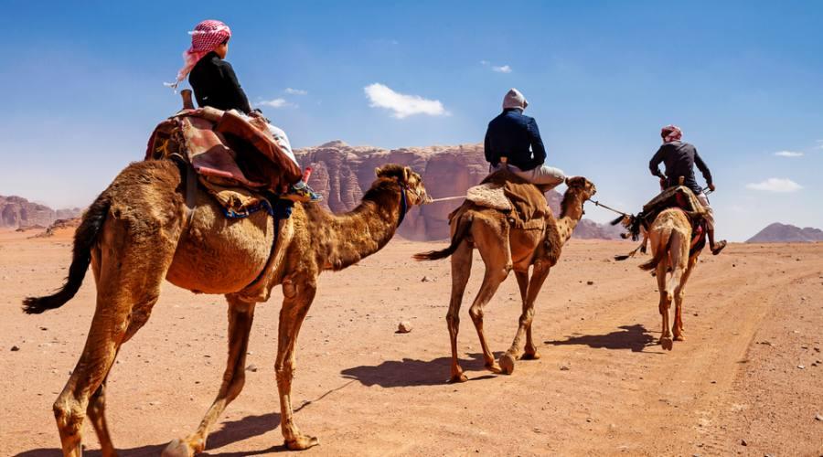 Cammellata nel deserto del Wadi Rum Giordania