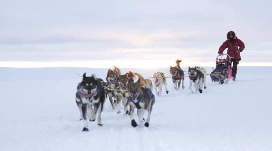- Safari con gli husky (JOERN LOSVAR_www.finnmarkslopet.no)