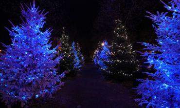 Mercatini di Natale in Baviera: Tour in pullmann da Macerata