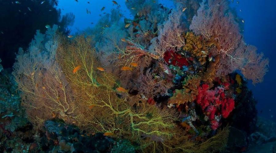 Il mare incontaminato delle isole Andamane