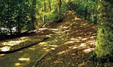 Avventura in Lucania immersi nella verde Foresta di Rifreddo