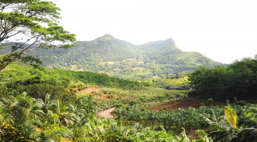 La natura rigogliosa di Mauritius