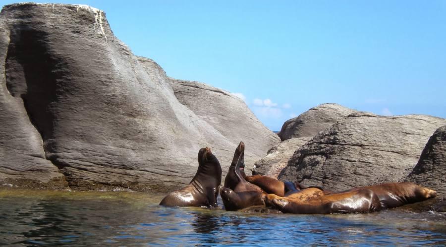 Isla Coronado, Loreto