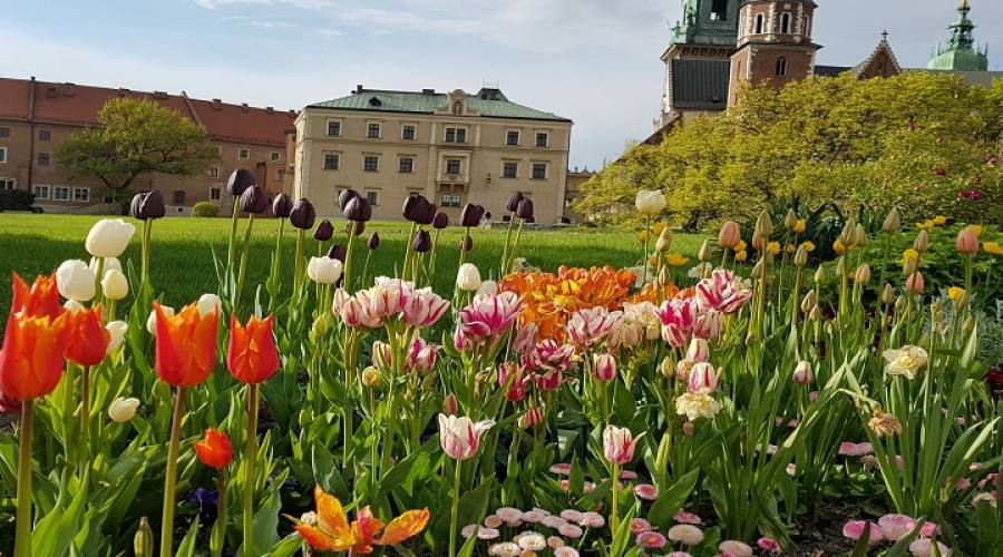 Giardino de catello di Wawel