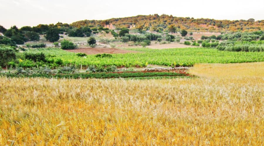 La Valle d'Itria