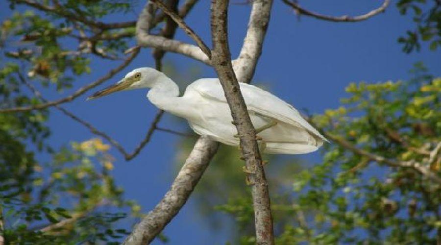 Specie di uccello della Malesia