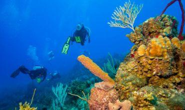 L'Havana più Crociera nel Paradiso Caraibico della subacquea