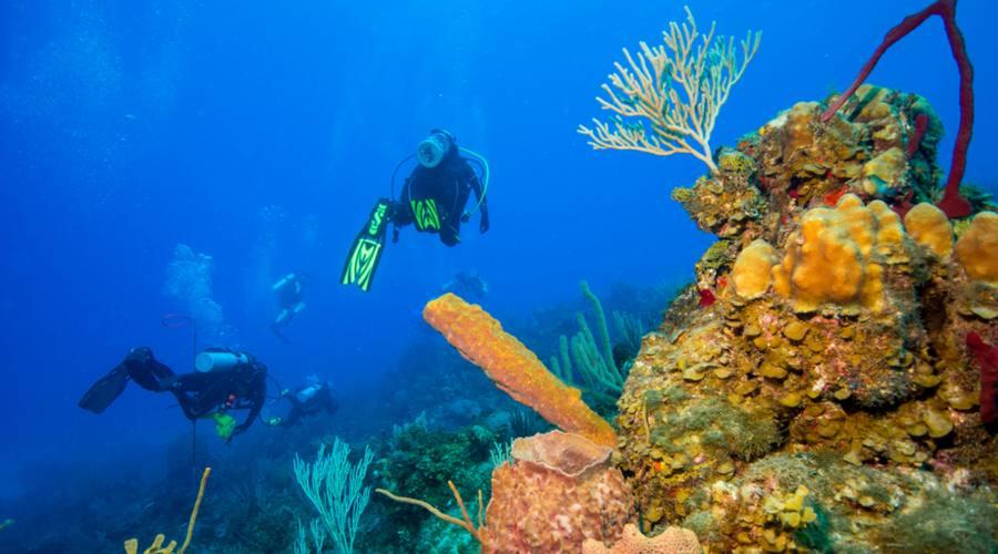 Giardini della Regina, diving