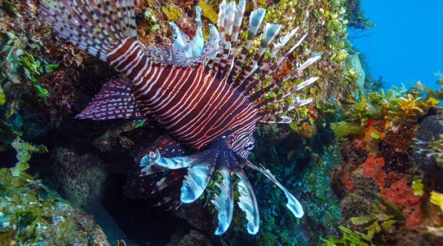 Giardini della Regina, barriera corallina