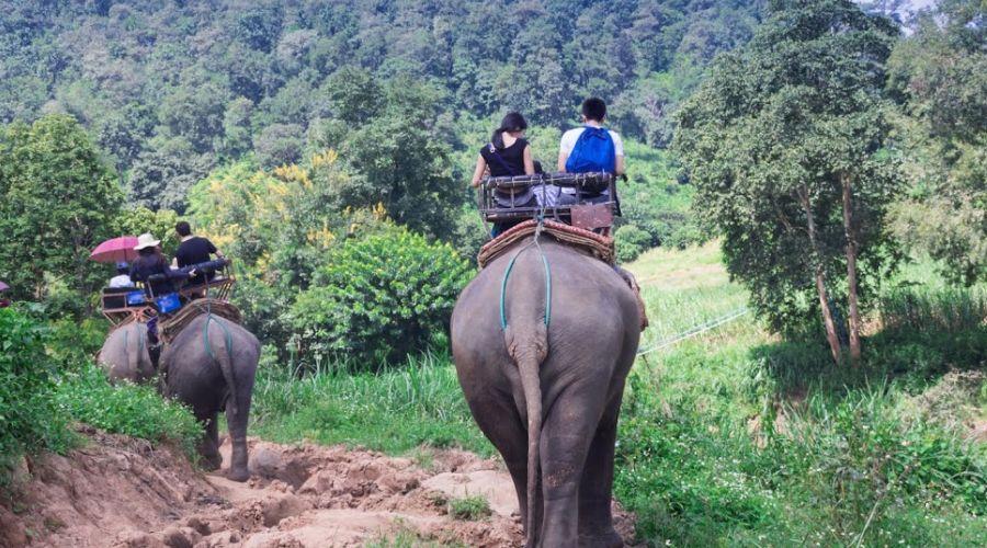 Trekking con gli elefanti
