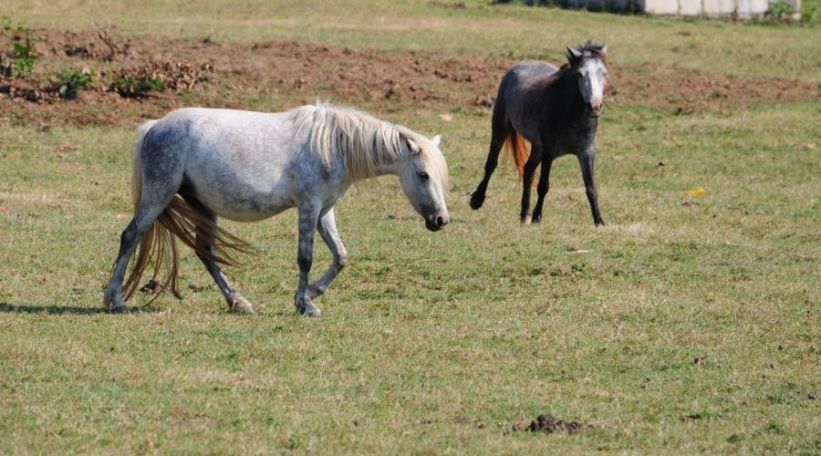 Cayo Saetia, animali liberi
