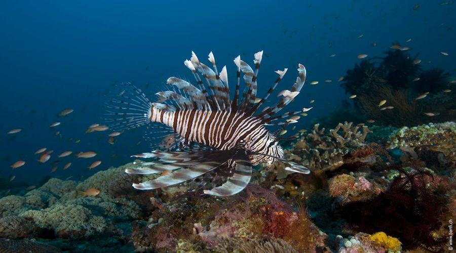 Vita marina della zona