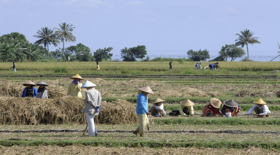 Campi coltivati artigianalmente