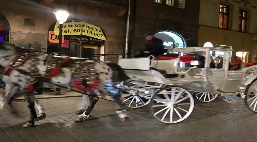 Tour a cavallo per le vie della città