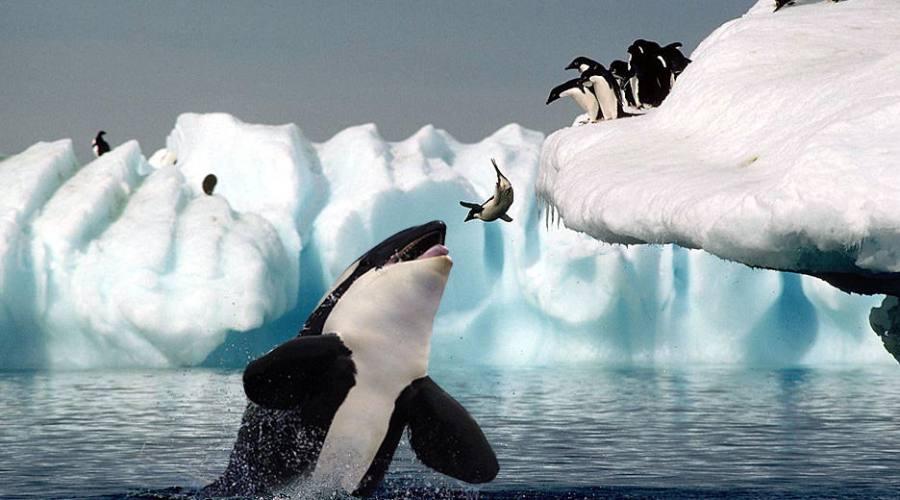 Avvistamenti Orche