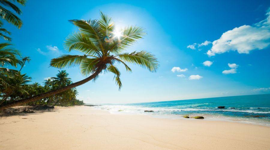 palme dell'isola