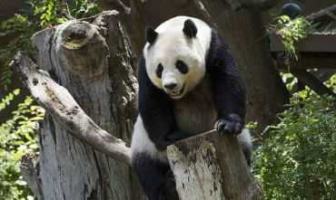 Monasteri, Montagne e i Panda