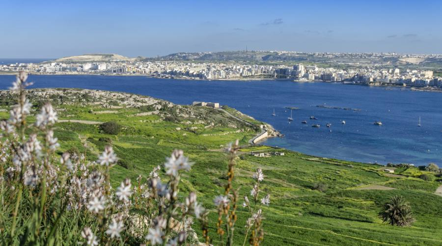 Malta: Bugibba