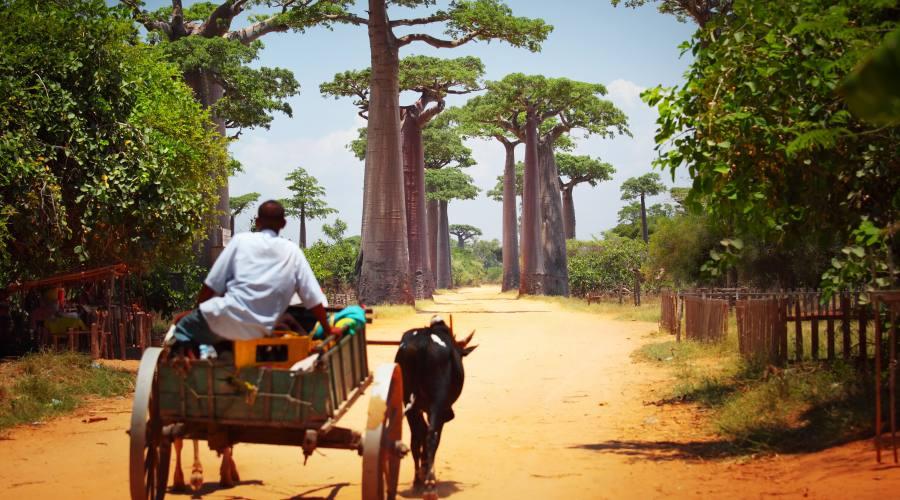 panorama malgascio