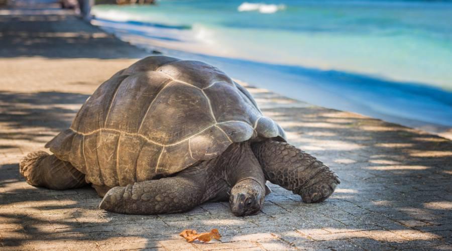 tartaruga gigante tipica