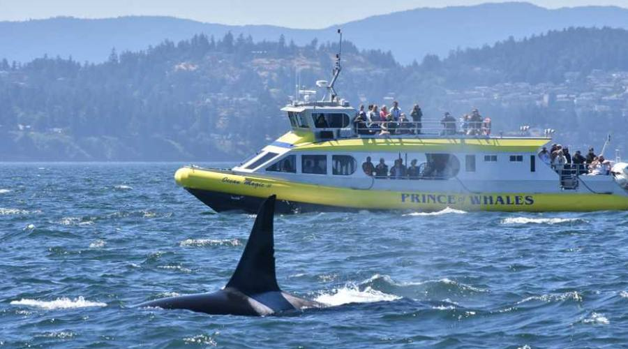Crociera avvistamento balene
