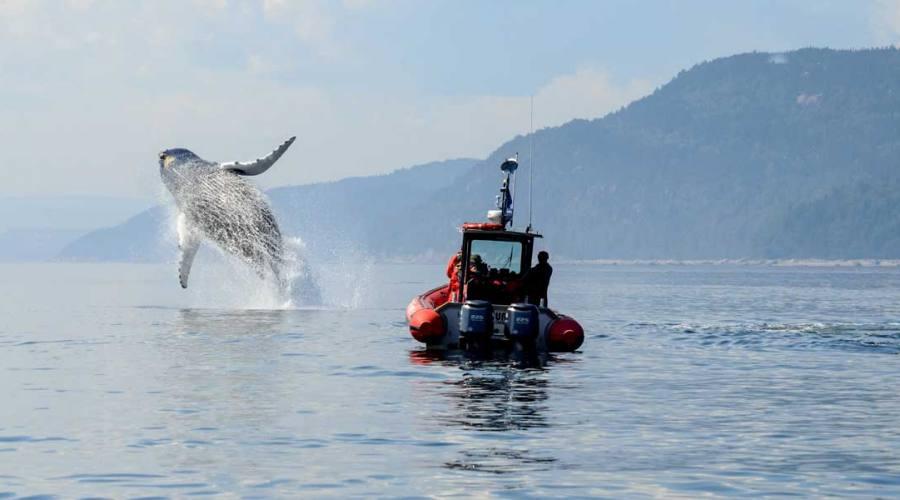 Minicrociera balene