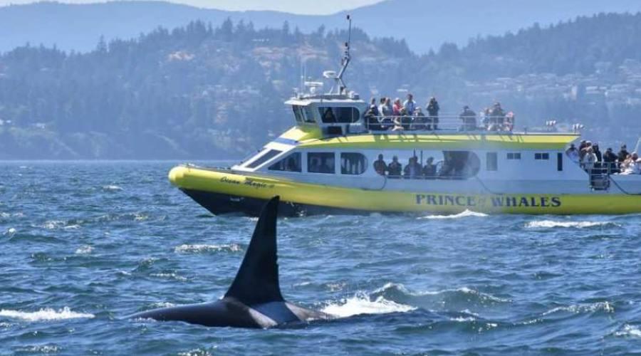 Le Balene